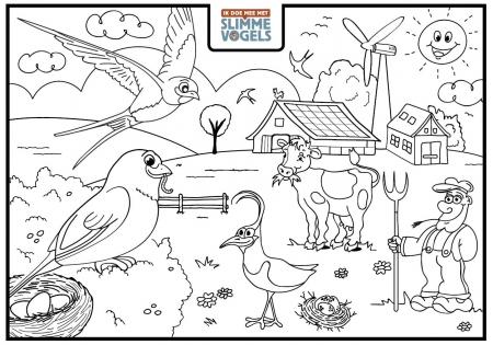Kleurplaten Over Vogels.Slimme Vogels Voor Kinderen Slimme Vogels